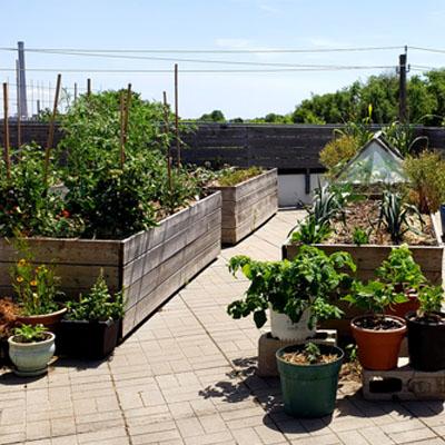 Riverdale Hub Rooftop Garden Tour
